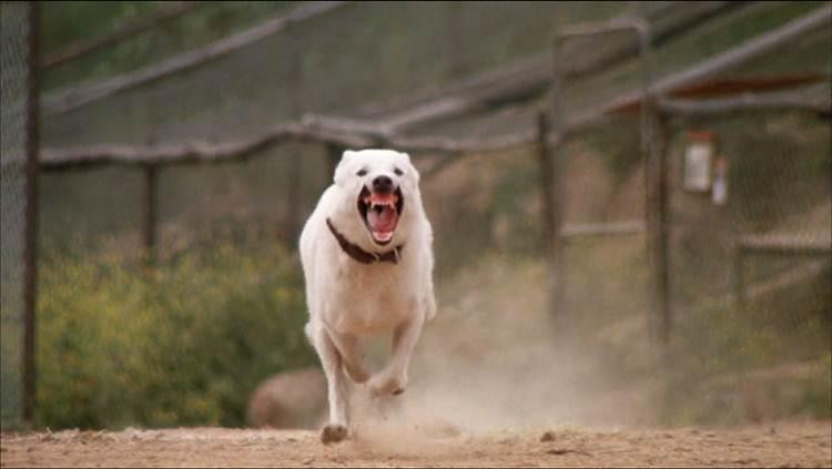 Cão Branco