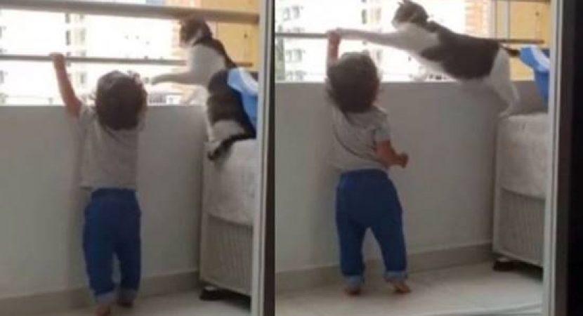 Gato protege criança e impede de subir na grade de proteção